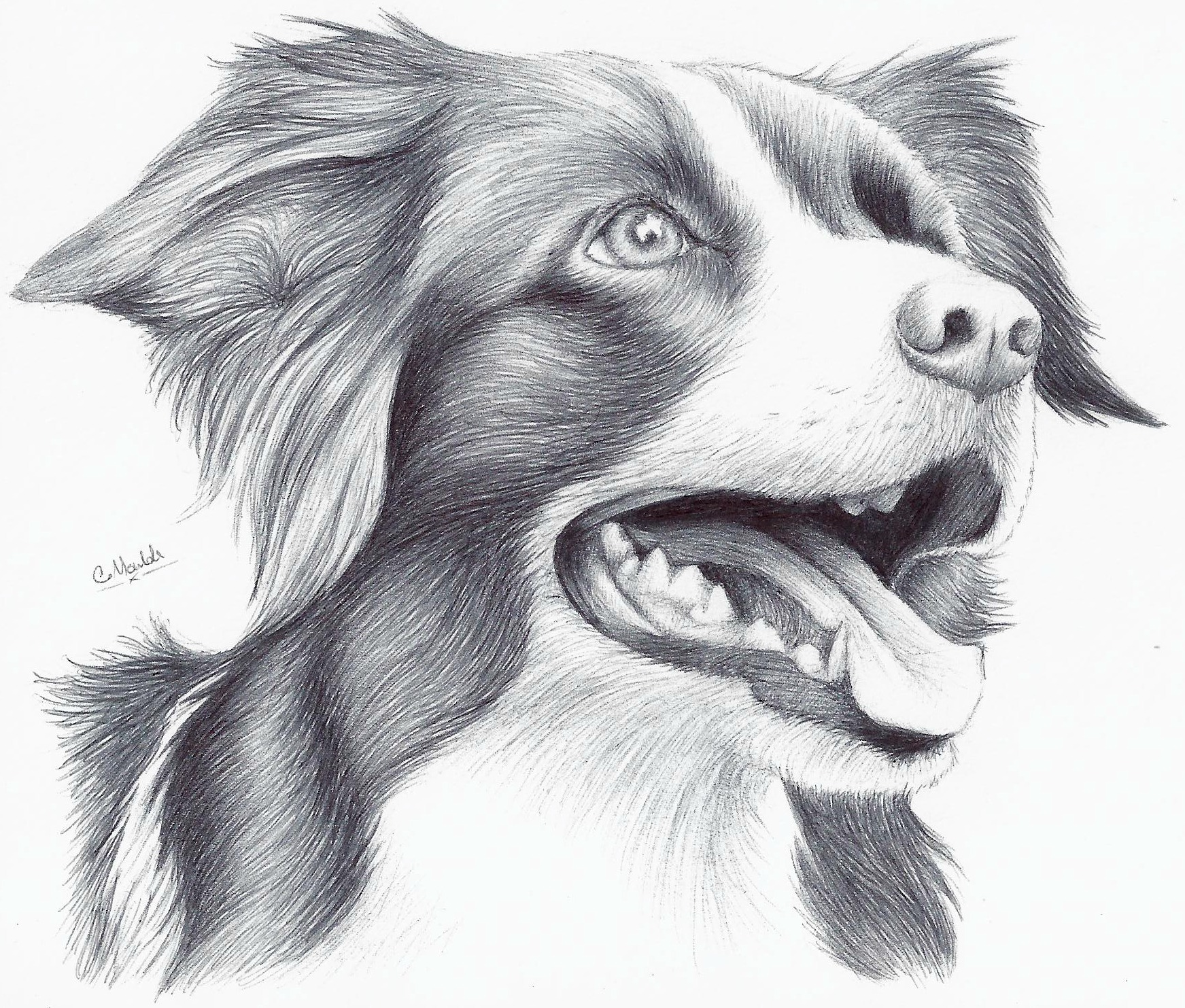 Animal Art Drawing