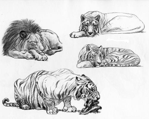 Animal Drawing Art
