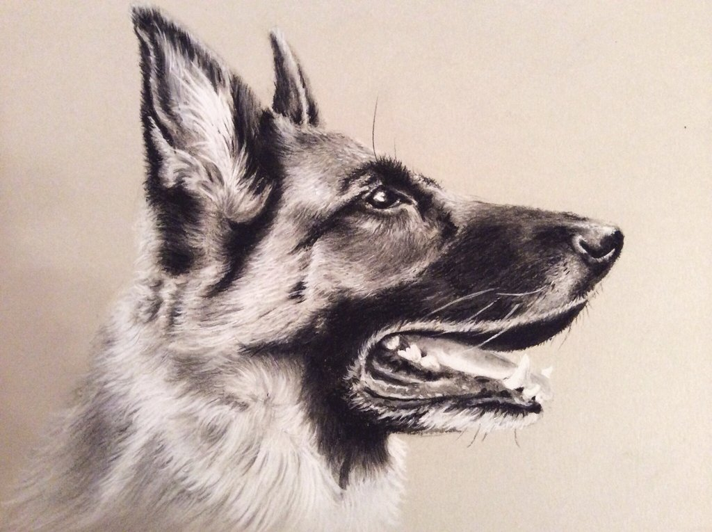 1024x765 Charcoal Animal Drawings - Animal Drawing Ideas