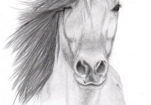 300x210 Cool Animal Drawing Ideas Animal Sketch Drawing At Getdrawings - Animal Drawing Ideas