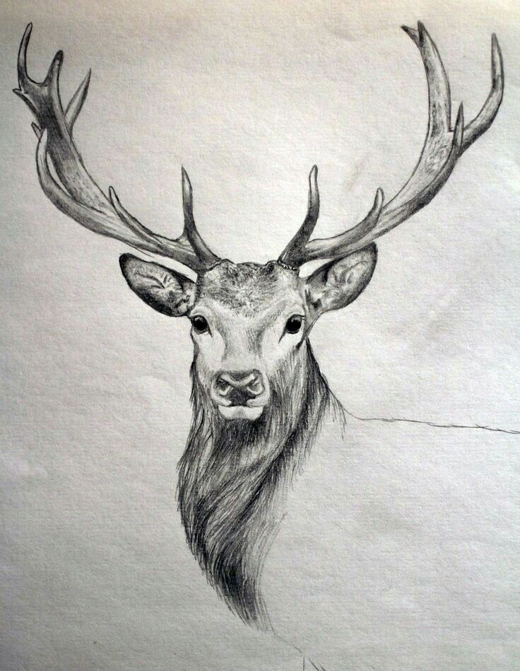 736x949 Free Easy Animal Sketch Drawing Information Ideas - Animal Drawing Ideas