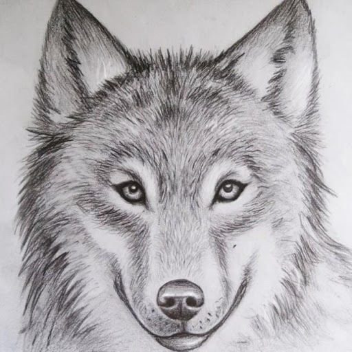 512x512 Animal Drawing Ideas Apk - Animal Drawing Ideas