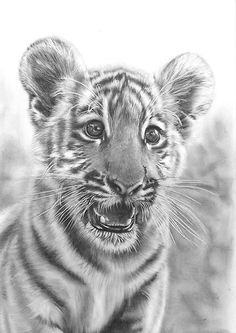 Animal Drawings Realistic