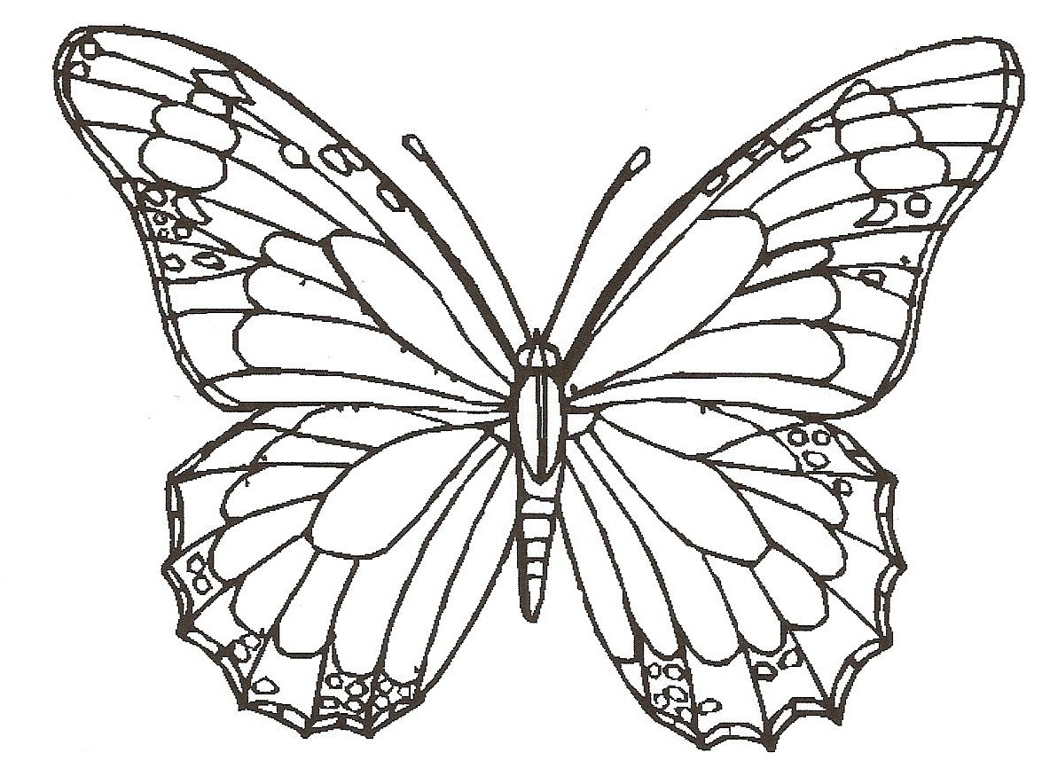 1175x875 easy drawings of flowers and butterflies image of simple pencil butterfly on rose drawing