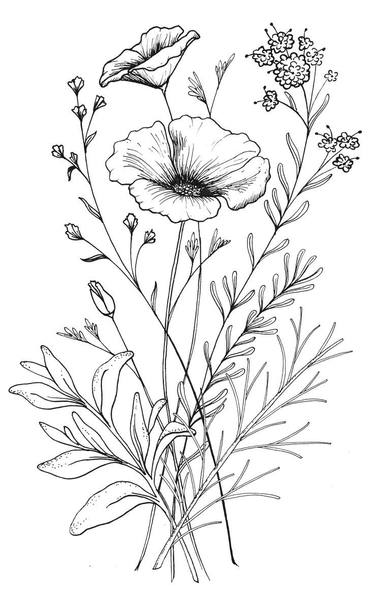 Drawings of flowers line drawing. Flower clip art free