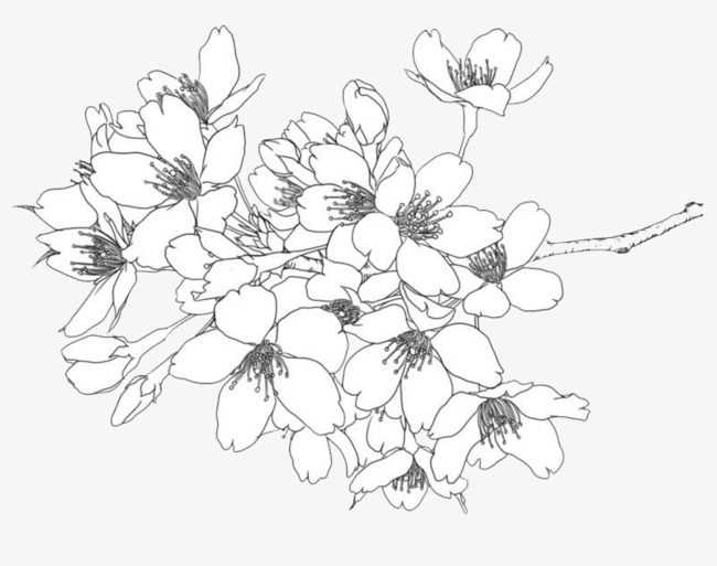 Drawings of flowers line drawing. Clipart at paintingvalley com
