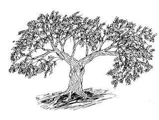 320x243 the olive tree care guide baring the aegis - Olive Tree Drawing
