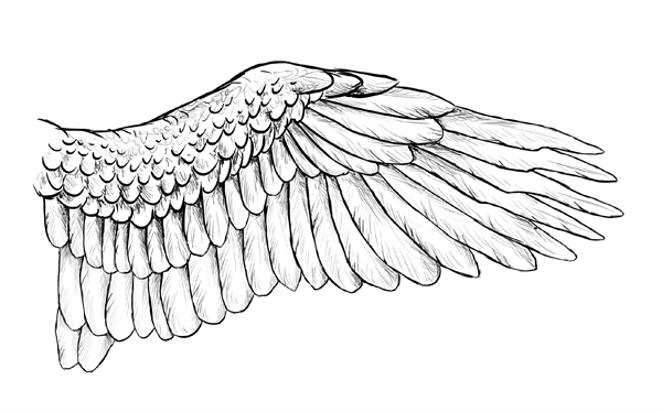 600x374 taking flight a beginner's guide into drawing wings - Owl Wings Drawing