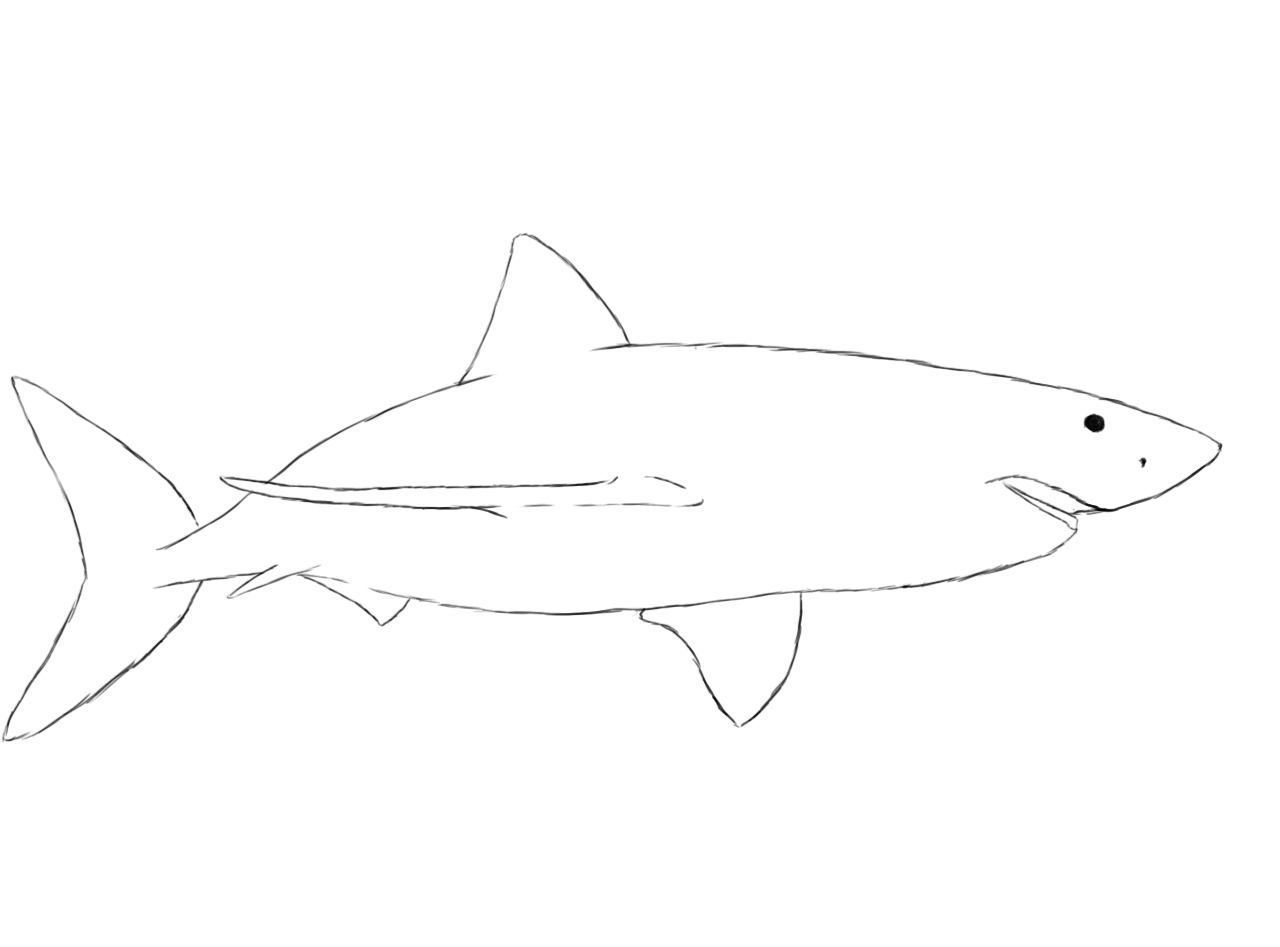 1280x947 how to draw a shark shark head drawing