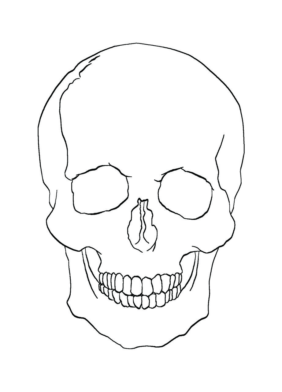 Skull Line Drawing At Paintingvalleycom Explore