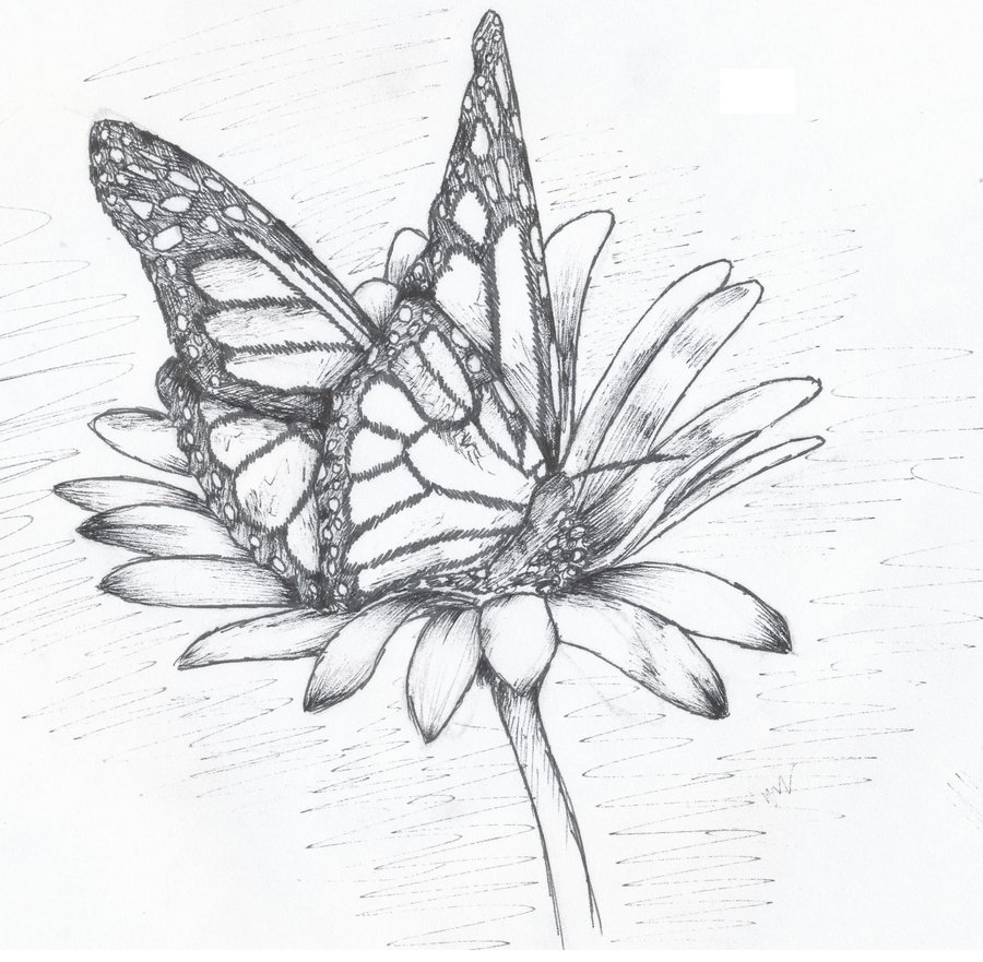 butterfly flower sketch at paintingvalley com explore collection