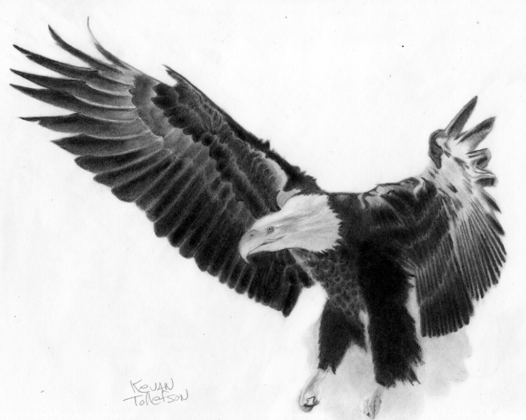 1024x819 flying eagle drawings in pencil flying eagle sketch eagle flying eagle in flight sketch