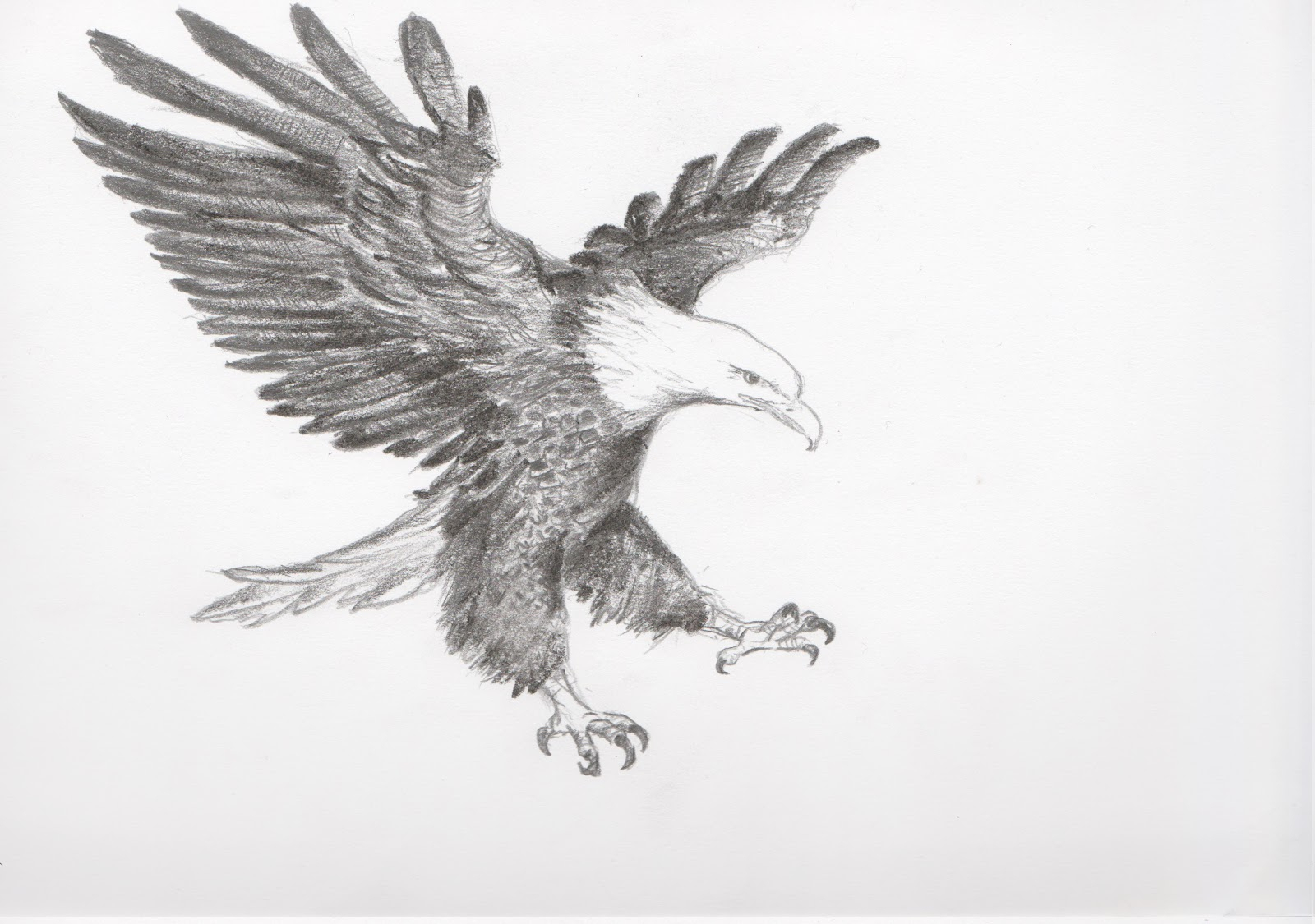 1600x1125 flying eagle sketch flying eagle sketch eagle sketch