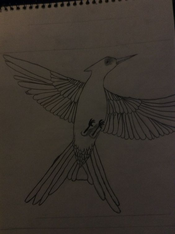 564x754 My Edited Mockingjay Sketch Drawings Mockingjay - Mockingjay Sketch
