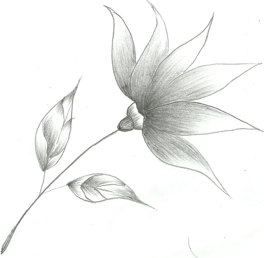 sketch art flowers at paintingvalley com explore collection of
