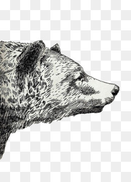 260x360 Free Download Drawing Grizzly Bear Sketch - Sketch Overlay